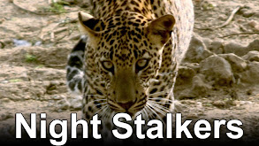 Night Stalkers thumbnail
