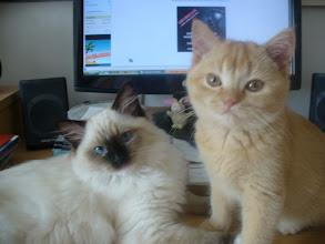 Photo: v novom domove s kamarátkou