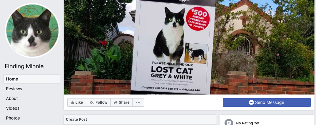snapshot of a facebook page for a missing cat
