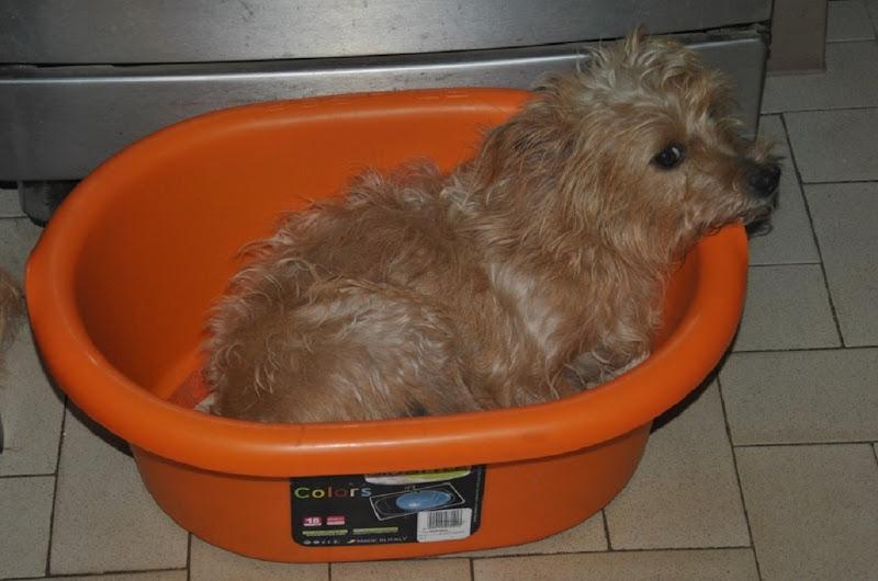 cane nel cesto  di Pretoriano