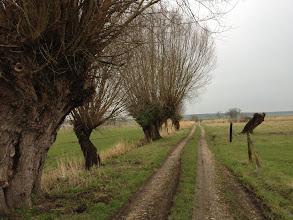 Photo: Vatteville-la-Rue - Les marais