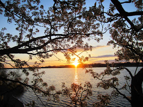 Photo: Pear blossoms around a gorgeous lake sunset at Eastwood Park in Dayton, Ohio.