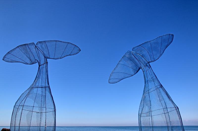 Le balene di Camogli di maurizio_longinotti