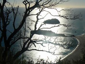 Photo: North Island, Tauranga