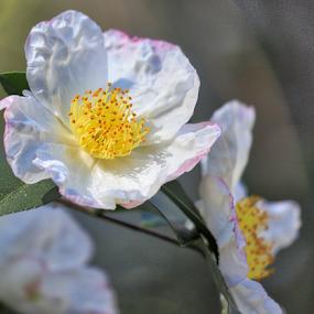 by Lauren Manzano - Flowers Flower Gardens