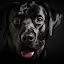 Blade III by Federico Venuda - Animals - Dogs Portraits ( natural light, breed, joy, clean background, cute, curious, happy, mamal, animal, pedigree, animalia, male, adult, portrait, close-up, sit, canine, joyful, resting, sitting, animal kingdom, pet, rest, companion dog, dog )