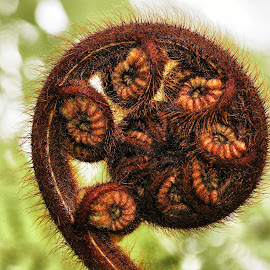 Fern by Tim Bennett - Nature Up Close Trees & Bushes