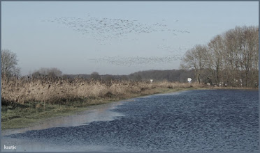 Photo: Landschap met zwermen vogels. Foto: Kaatje Jansen