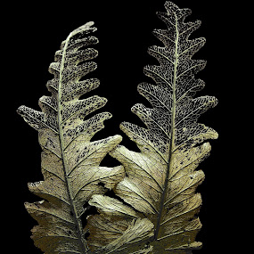 Golden Fern by Tanya Rossi - Artistic Objects Other Objects ( fern, plants, leaf, leaves, ferns, golden )