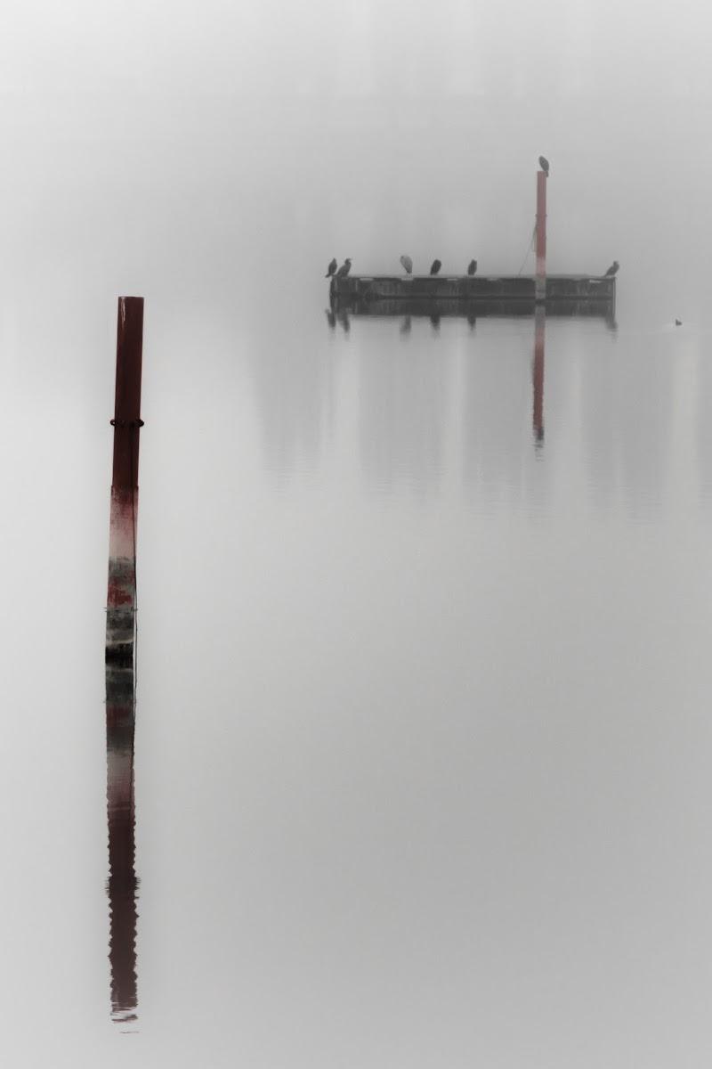 Nel lago con la nebbia... tutto cambia di NickAdami