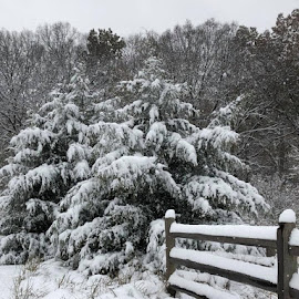 Snow Fence by Lori Fix - Landscapes Weather