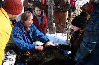Photo: Tim Ginnett, UWSP professor of wildlife, has a UWSP student assist in placing a radio collar on a black bear