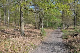 Photo: Forêt de Chantilly