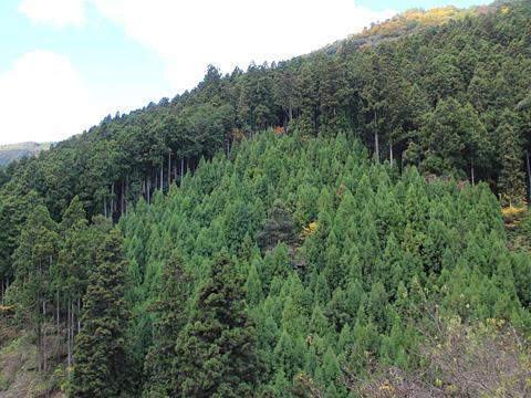 奈良交通「八木新宮線」 ・960 五條~上野地間 その3