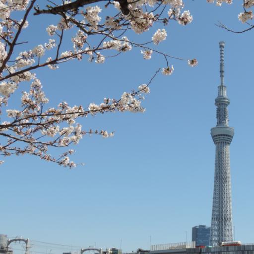 東京スカイツリーと桜(JP162) 旅遊 LOGO-玩APPs
