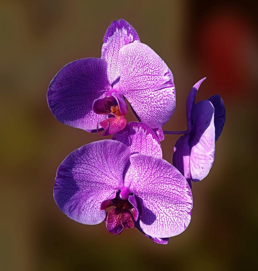 trio purple  by Git Gitos - Flowers Flower Gardens ( flower garden, purple, blur,  )