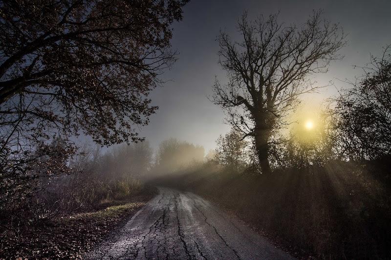 luce tra la foschia del mattino di massimo bertozzi
