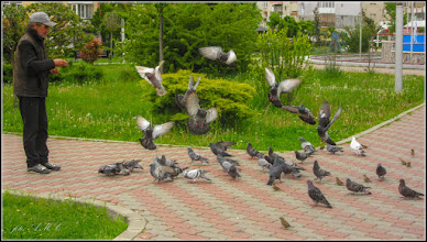 Photo: Turda - Păsări   in Parcul teilor - 2019.05.07