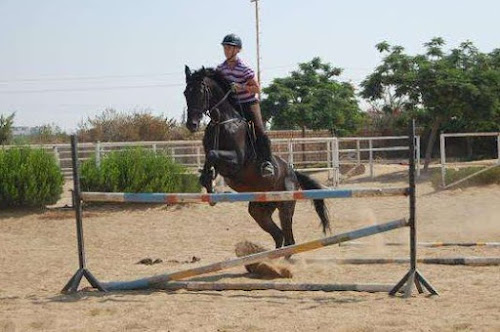 Show jumping in cairo egypt 1.15 m jump expat woman