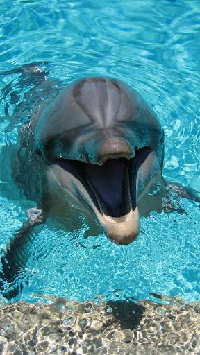 Dolphin Lock - Slide To Unlock|玩工具App免費|玩APPs