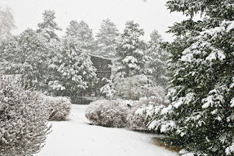 Photo: Surprise snow storm in Los Alamos, April 11, 2009