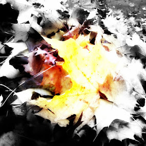 Autumn Burn by Che Dean - Nature Up Close Leaves & Grasses