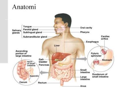die Anatomie des menschlichen Körpers – Apps bei Google Play