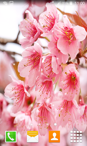 Download Cherry Blossom Live Wallpapers Google Play Apps Adsomolpqk6j Mobile9