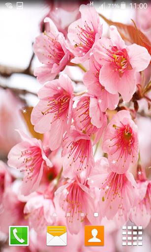 Sakura Falling Live Wallpaper Downloads Download Cherry Blossom Live Wallpapers Google Play