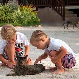 Cats Aplenty by Geoffrey Wols - Babies & Children Children Candids ( toddlers, cats, children, beach, playing, girl, boy,  )