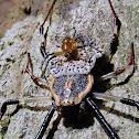Ornamental Tree Trunk Spider