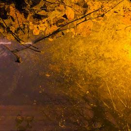 by Eirin Hansen - Abstract Light Painting