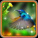 Colibri Love HD icon