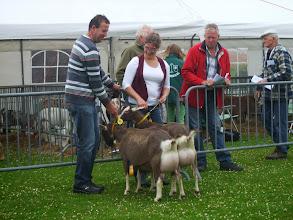 Photo: Klasse 5: 2 jarige toggenburger geiten. 1a. Renske's Fabiola'JH'; 1b. Renske's Frederika 'JH'