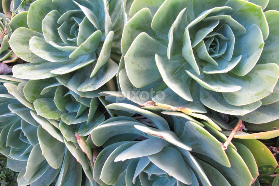 by Zaza Rubio - Nature Up Close Other plants