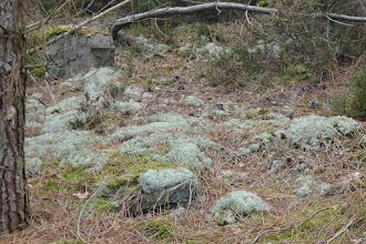 Photo: lichen, mousse, bruyère