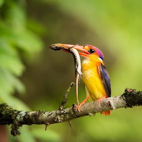 odkf by Amol Patil - Animals Birds