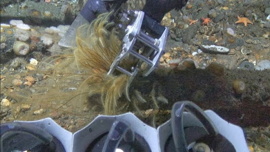 Photo: ROV sampling hydroid colony  (Photo credit: Deepwater Canyons 2012 Expedition, NOAA-OER/BOEM)
