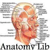 Free Anatomy Library