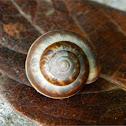 Carthusian snail