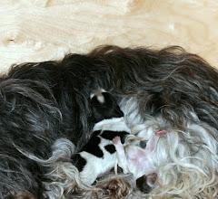Photo: Toffie hat ausgeschlafen :)