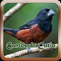 Cantos do Curio mp3 icon