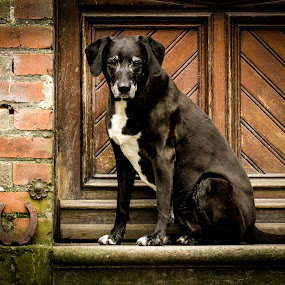 classic by Mathias Ahrens - Animals - Dogs Portraits
