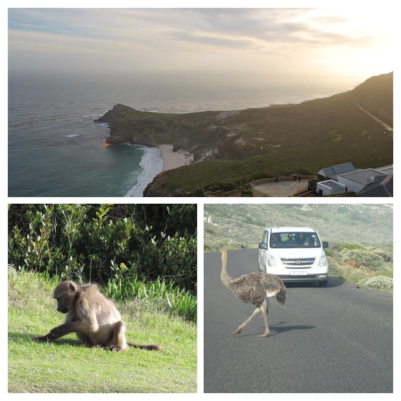 Cape of Good Hope, South Africa, monkeys, ostrich