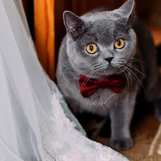 Wedding photographer Olga Glazkina (prozerffina1). Photo of 26.10.2016