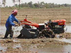 Photo: A farmer preparing the rice field 2010 [Photo provided by  Khidir A. Hammed]