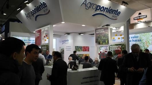Grupo Agroponiente afronta su duodécima presencia en Fruit Logística 2020