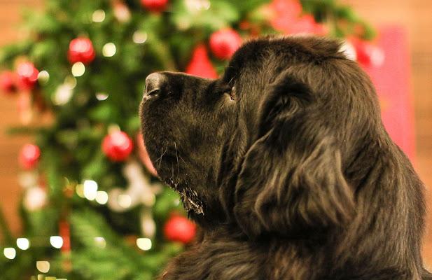 Uno sguardo al Natale di FilippoColombo
