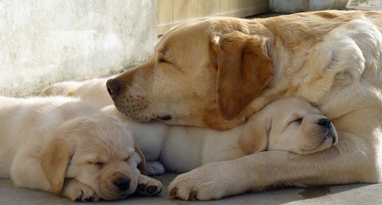 Protezione materna di StePh