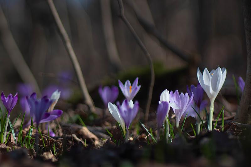 La primavera di Fabyfoto